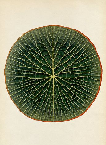 Katie Scott - Sublime Botanicum