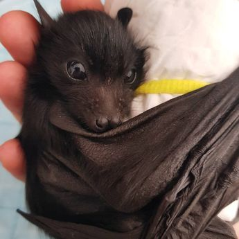 20 Baby Animals That Prove Cuteness Is a Real Superpower