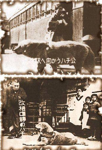 韓国人「日本の渋谷駅の象徴、忠犬ハチ公について調べてみよう」 : カイカイ反応通信