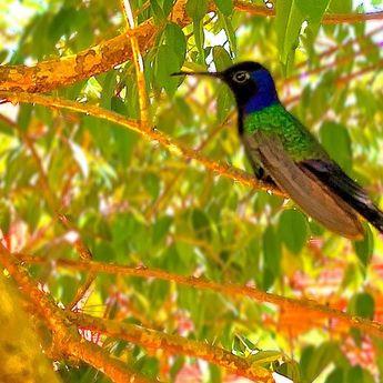 Beija flor #beijaflor #hummingbird #nature #iphonography #bomdia #goodvibes #igers #natureza pins instag  Beija flor #beijaflor #hummingbird #nature #iphonography #bomdia #goodvibes #igers #natureza #followme #littlebird #bird #brazil #ms #brasil