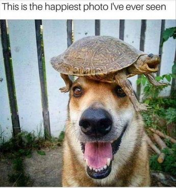 This is the happiest photo I've ever seen #cuteanimals #funny