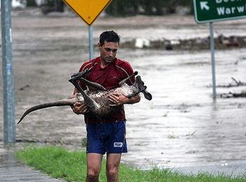 During flash floods, a man in Australia saw a kangaroo nearly drowning. Although the kangaroo is a wild animal, he braved the waters and saved the little guy.