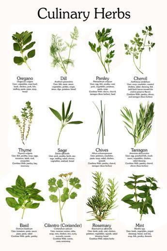 Herbs Herbal Medicines Herb Garden CD 29 Books Culinary Herbs Medicinal Herbs