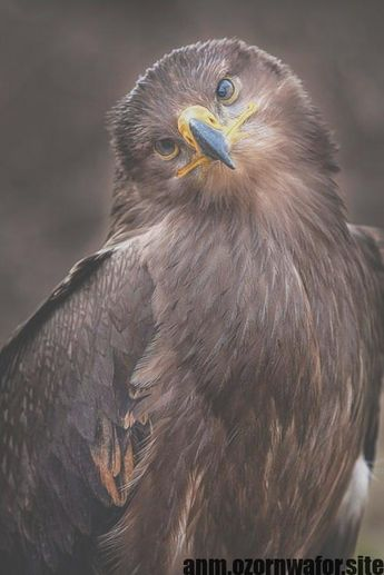 Newest Totally Free birds of prey falcon Suggestions  As being a gulls connected with prey wedding photographer, the most important difficulty almost all make a co #birds #falcon #Free #Newest #prey #Suggestions #Totally