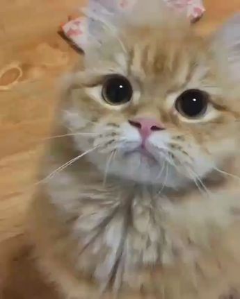 Video Mother Cat and Cute Kittens - Best Family Cats Comilation 2019 #comilation #family #kittens #mother #video