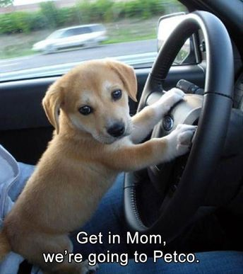 Funny Animal Memes Of The Day - 32 Pics #dogmemes - Lovely Animals World