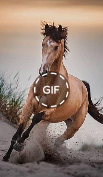 Best Tips for Starting Young Horses Over Fences In 2019 – #horse #horses #equestrian #horsesofinstagram #equine #pony #horseriding #dressage #pferd #instahorse #equestrianlife #love #horsephotography #showjumping #horselove #photography #horselover #pferde #cheval #caballo #horsebackriding #nature #horseofinstagram #riding #jumping #cavalo #caballos #cavalos #horselife #bhfyp – ANIMALS LOVELY