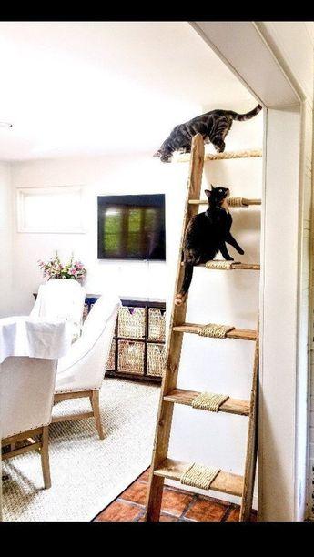 Cadder, Cat Ladder (Cadder), Cat Furniture