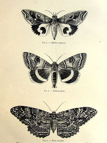 Tatto Ideas 2017 - 1860 antique moths butterflies print, original vintage moth plate, french lepidotera engraving, papillon butterfly illustration