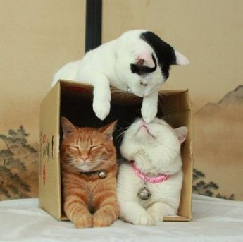 Simon's Cat Logic: Why Cats Love Boxes [VIDEO