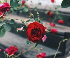 255 images about red on We Heart It | See more about red, pink and heart