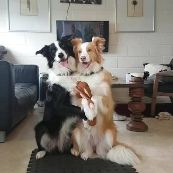 Adorable Dogs Love To Pose For The Camera
