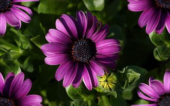 flowers-high definition-wallpapers-29