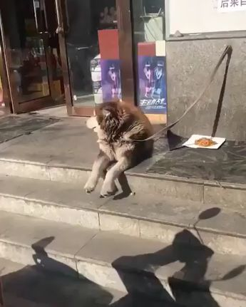  Source: unknown [Thank you very much!] - Click Visit To Watch More Videos - #cutedog #adorabledogs #lovelydog #funnydogs