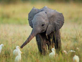 50 Maravillosas imágenes que capturan momentos extraordinarios de la vida salvaje