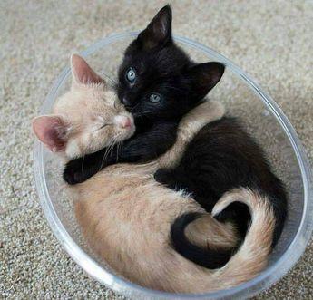 Two little beauties❤❤