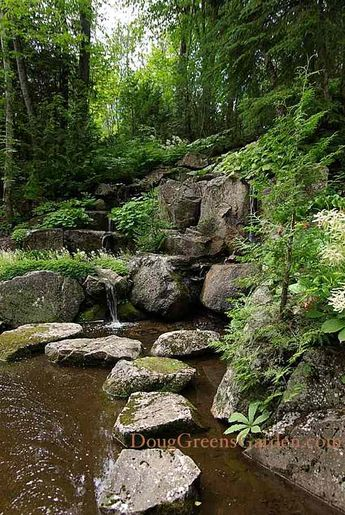 Practical Backyard Ponds - From Building to Maintaining