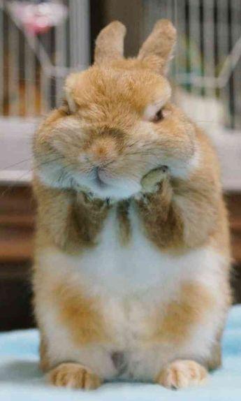 Precious, who's a grumpy bunny?