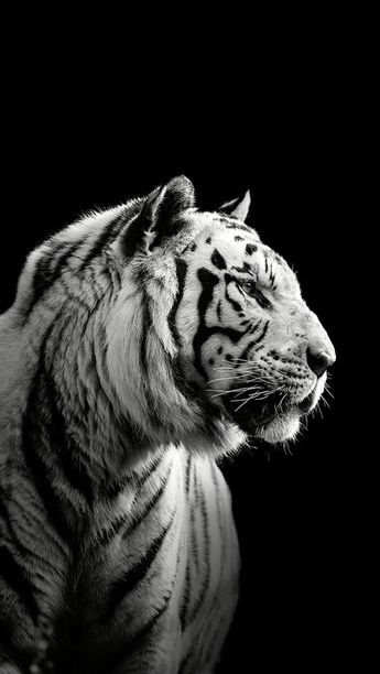 List of attractive macan putih wallpaper ideas and photos  Thpix