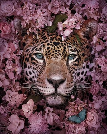 16 Stunning Animal Portraits By Andreas Häggkvist To Raise Awareness For Endangered Species