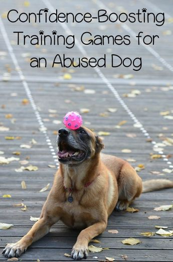3 Confidence-Boosting Training Games for an Abused Dog