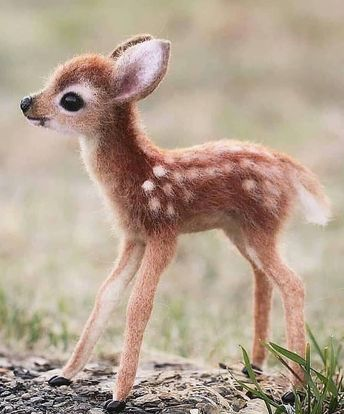 The 100 Cutest Animals Of All Time