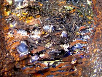 Unusual boulder specimen 1765 cts mm 1955