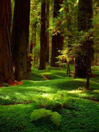 Tree Apron Moss