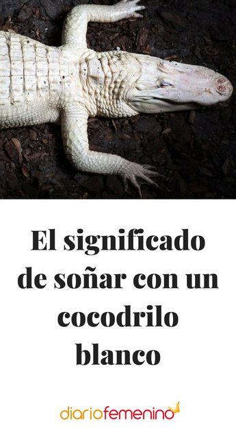 El significado de soñar con un cocodrilo blanco