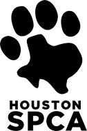 #lostdog Female mini yorkie 3/22/13 Shenandoah TX black and brown shaggy hair.
