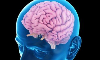 Scientists reverse memory decline using electrical pulses