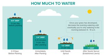 Watering New Grass Seed – How Often & How Much to Water New Seeds