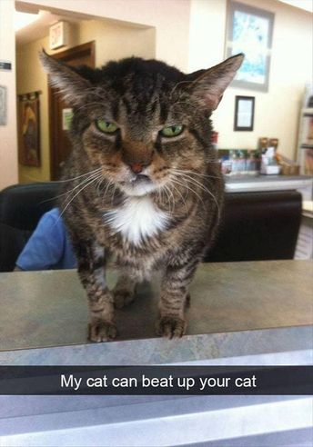 Funny Animal Pictures Of The Day Release 12 (45 Photos)