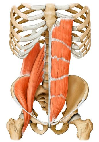 Everything you need to know about your core muscles