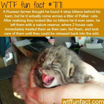 50 RANDOM WTF FACTS IN YOUR FACE THAT WILL FRY YOUR BRAIN