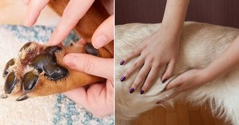 30 Natural Home Remedies To Avoid A Trip To The Vet