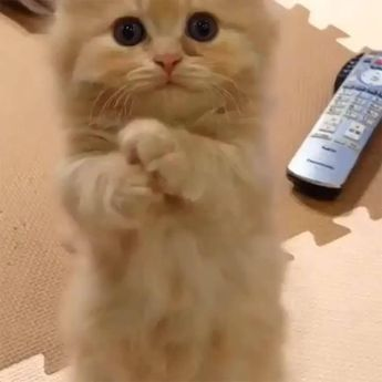 I have opposable thumbs.  Really I do!