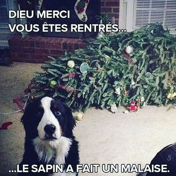 Chat VS sapin de Noël