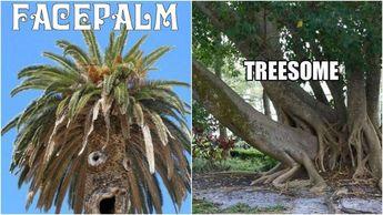 lets tree meme