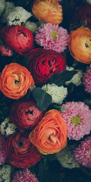The Meaning Behind Popular Valentine's Day Flowers