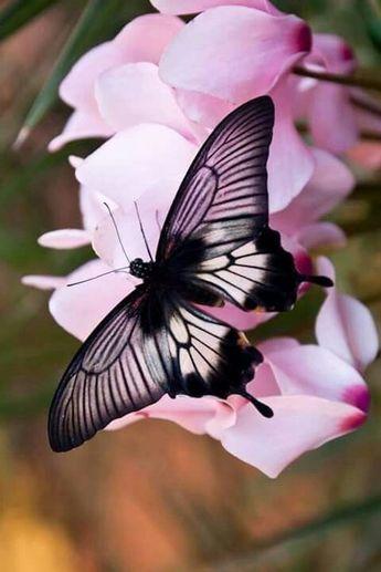 √ 6 Different Types of Butterflies