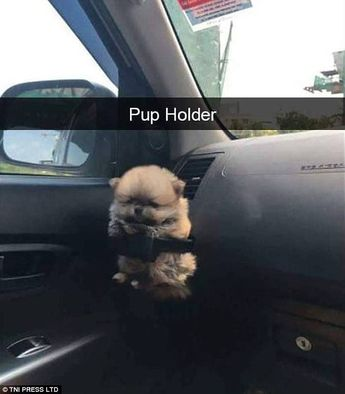 Who needs a cup holder when you can have a pup holder? Luckily this adorable pooch fitted perfectly into the holder