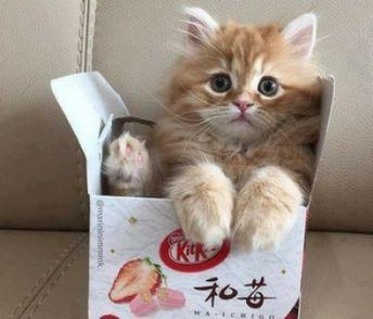Can You Train A Cat?