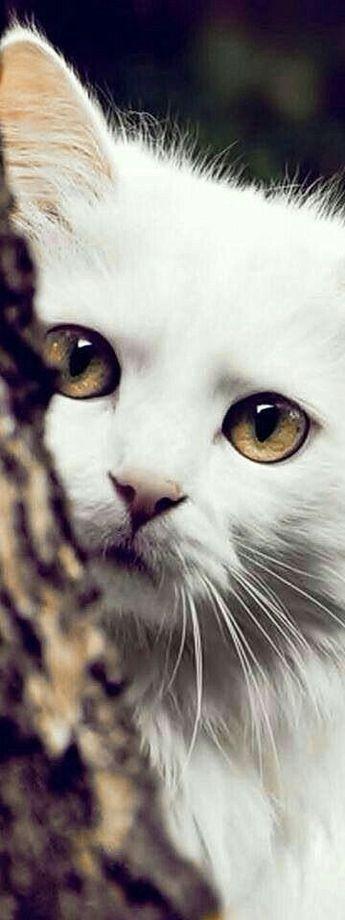 Amour de chats 🧡🧡🧡