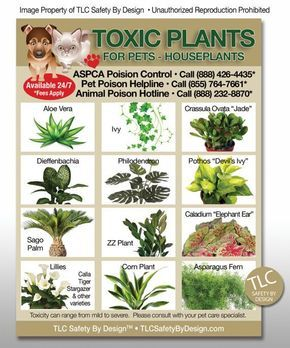 """POISONOUS TOXIC PLANTS Flowers Trademarked for Pets Dogs Cats Emergency Home Alone 5"""" x 7"""" Veterinarian Approved Fridge Safety Magnet"""