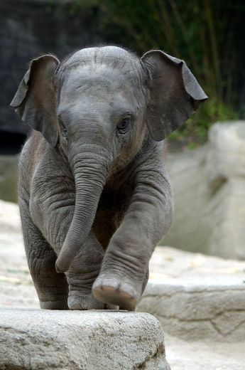 Baby Elephant from: Feeling