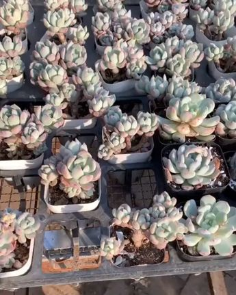 Repotting Succulents— the Right Way