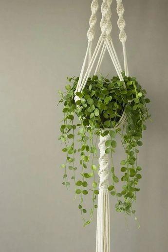 40 indoor hanging plants ideas to decorate your home 1 » cityofskies.com #indoorplantsdecor #indoorplantsdiy #indoorplantsideas