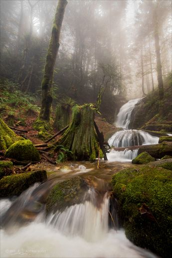 Coal Creek Falls near Renton, WA - I am hiking this today!