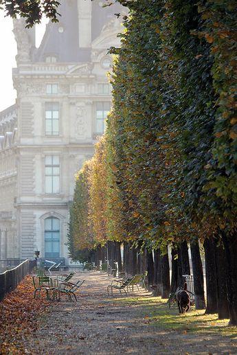 Paris Photography, Afternoon light in the Tuileries, Paris France, Paris Gardens, Paris decor, Nature, Paris in the Autumn